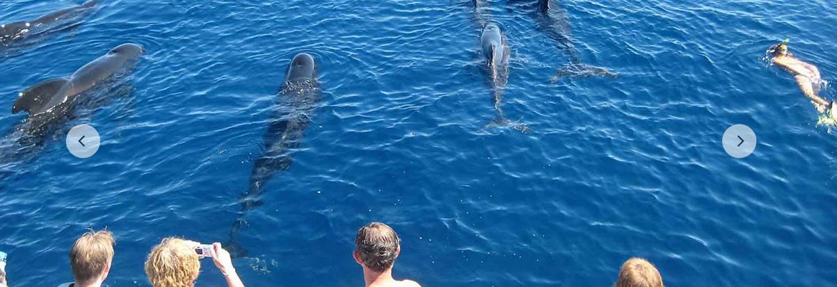 nager-dauphin